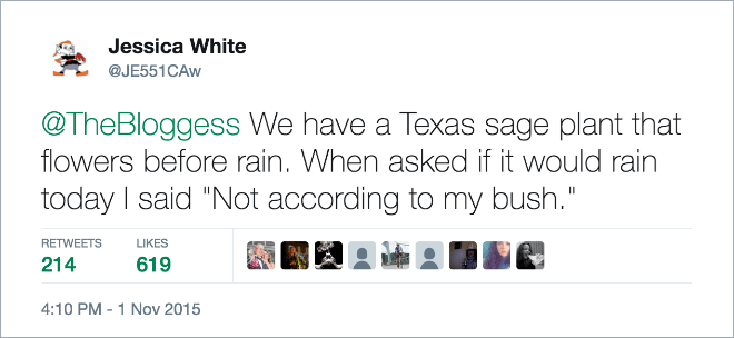 """Funny tweet that reads, """"We have a Texas sage plant that flowers before rain. When asked if it would rain today I said 'Not according to my bush'"""""""