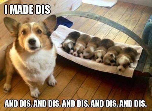 funny meme - Dog - IMADE DIS AND DIS.AND DIS.AND DIS.AND DIS.AND DIS.