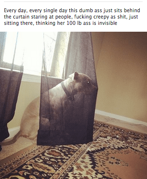 funny meme - Product - Every day, every single day this dumb ass just sits behind the curtain staring at people, fucking creepy as shit, just sitting there, thinking her 100 lb ass is invisible