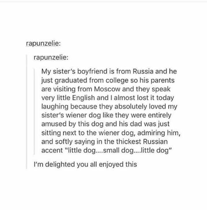 "Text - rapunzelie: rapunzelie: My sister's boyfriend is from Russia and he just graduated from college so his parents are visiting from Moscow and they speak very little English and I almost lost it today laughing because they absolutely loved my sister's wiener dog like they were entirely amused by this dog and his dad was just sitting next to the wiener dog, admiring him, and softly saying in the thickest Russian accent ""little dog....small dog....itle dog"" I'm delighted you all enjoyed this"