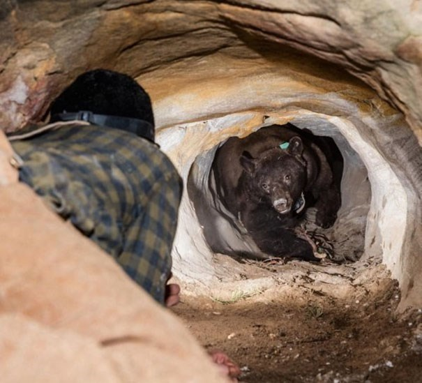 Tunnel that dog got stuck in