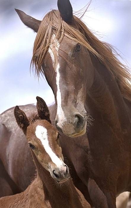 wild mustang horse and its baby, both with white stripes on their noses