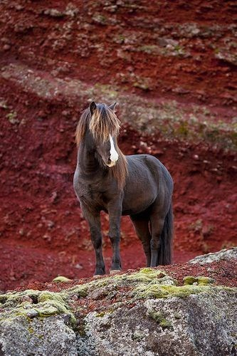 brown horse standing in front of a red mountain