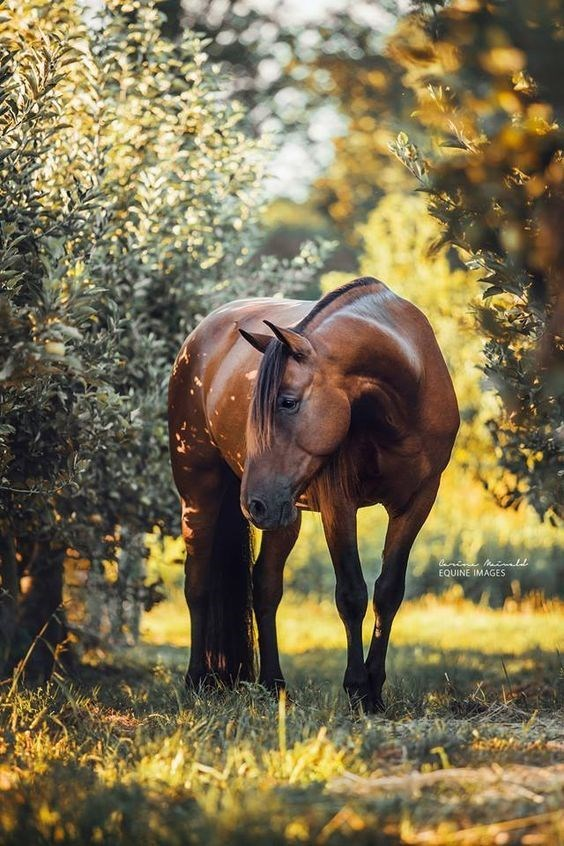 chestnut horse standing among bushes at sunset