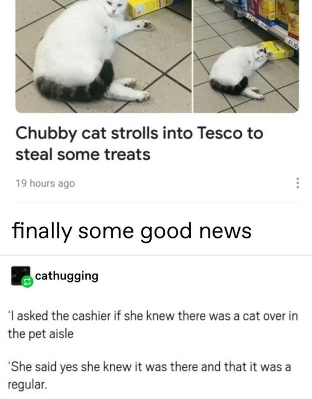 wholesome meme - Text - GA £1.10 Chubby cat strolls into Tesco to steal some treats 19 hours ago finally some good news cathugging | asked the cashier if she knew there was a cat over in the pet aisle 'She said yes she knew it was there and that it was a regular.