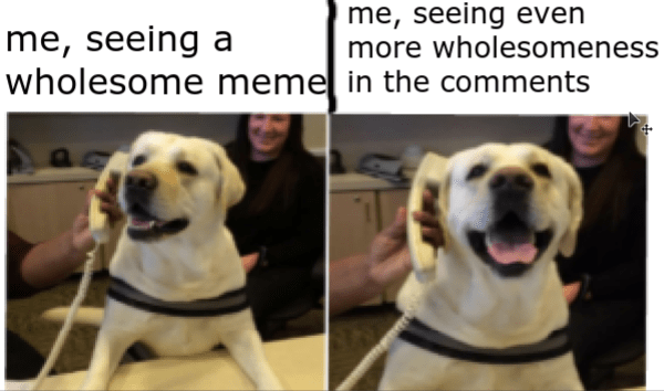 wholesome meme - Dog breed - me, seeing even more wholesomeness me, seeing a wholesome memel in the comments