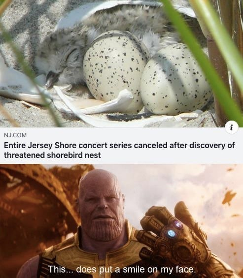 wholesome meme - Adaptation - i NJ.COM Entire Jersey Shore concert series canceled after discovery of threatened shorebird nest This... does put a smile on my face.