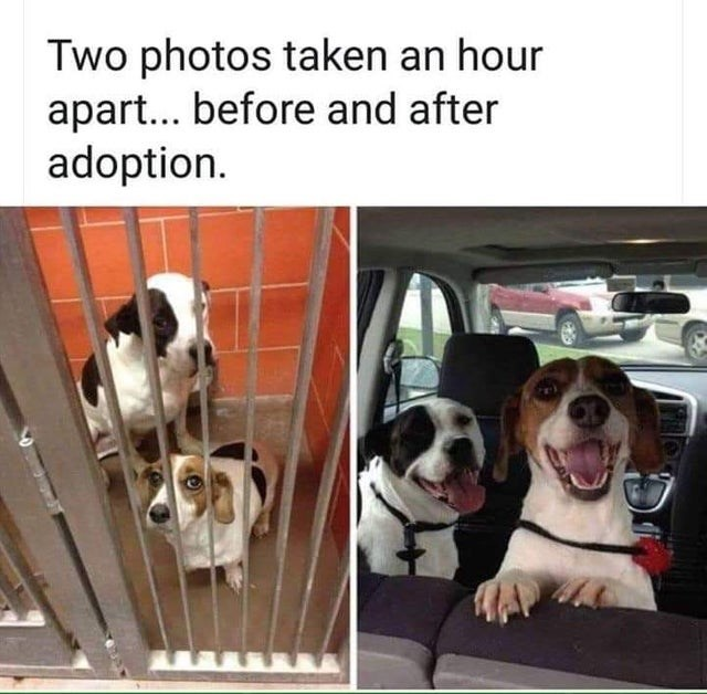 wholesome meme - Dog - Two photos taken an hour apart... before and after adoption