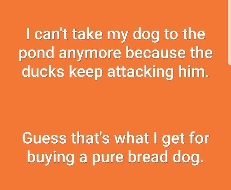 Text - I can't take my dog to the pond anymore because the ducks keep attacking him. Guess that's what I get for buying a pure bread dog.