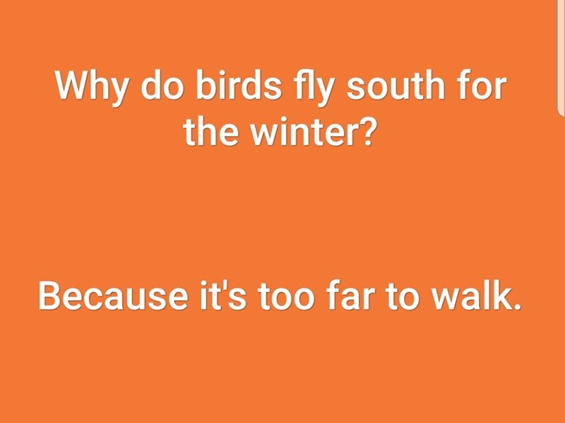 Text - Why do birds fly south for the winter? Because it's too far to walk.