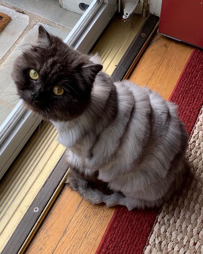 tweet about cat haircut