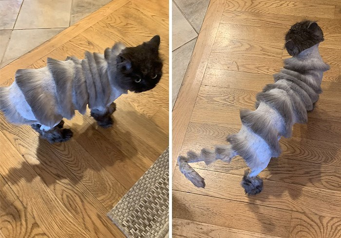 tweet about cat haircut - Canidae