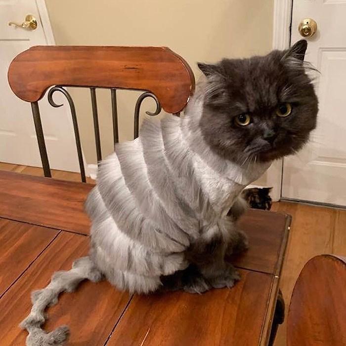 tweet about cat haircut - Cat