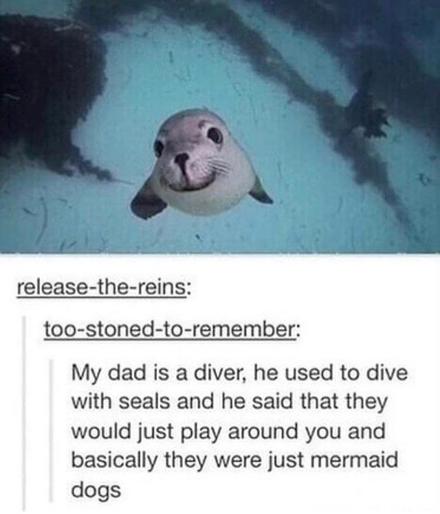 wholesome meme - Organism - release-the-reins: too-stoned-to-remember: My dad is a diver, he used to dive with seals and he said that they would just play around you and basically they were just mermaid dogs