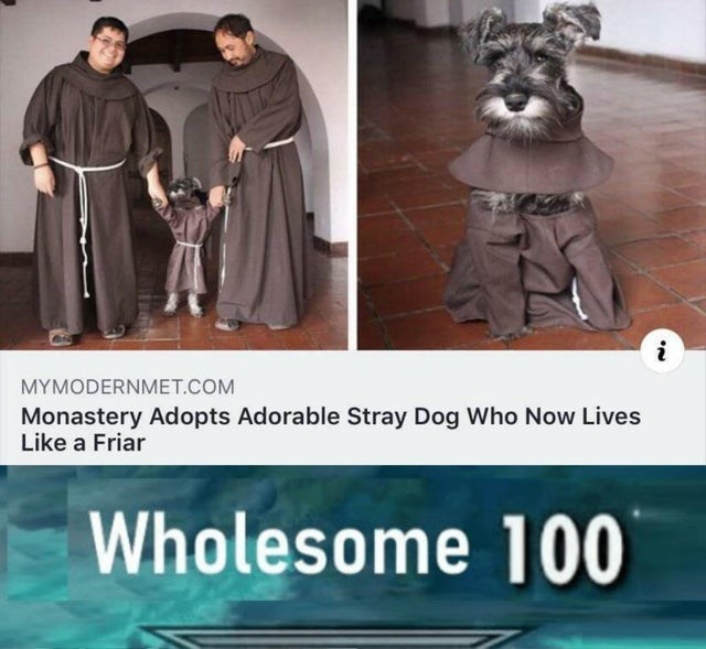 wholesome meme - Photo caption - i MYMODERNMET.COM Monastery Adopts Adorable Stray Dog Who Now Lives Like a Friar Wholesome 100