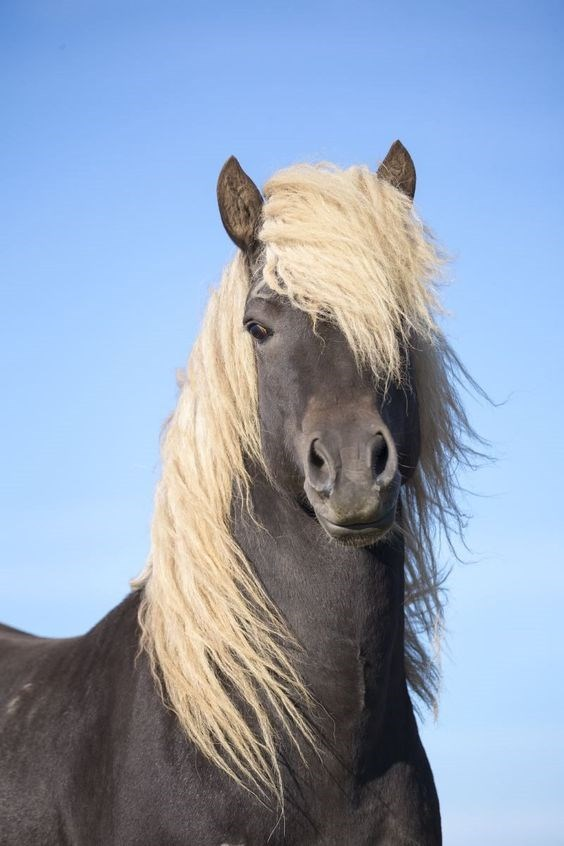 grey horse with a flaxen mane and blue sky behind it