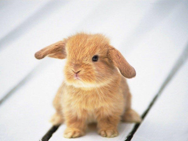 cute little rabbit cuteness overload