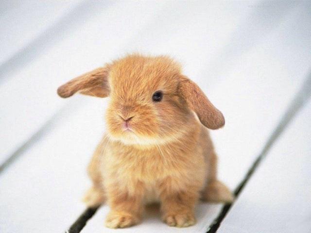 cute little rabbit cuteness overload