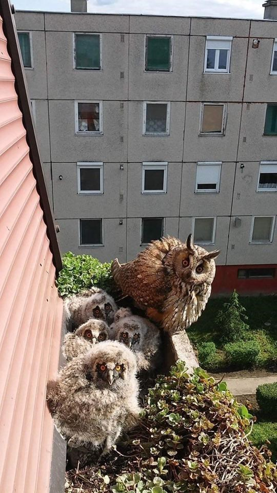 cute owls perched on a perch with babies