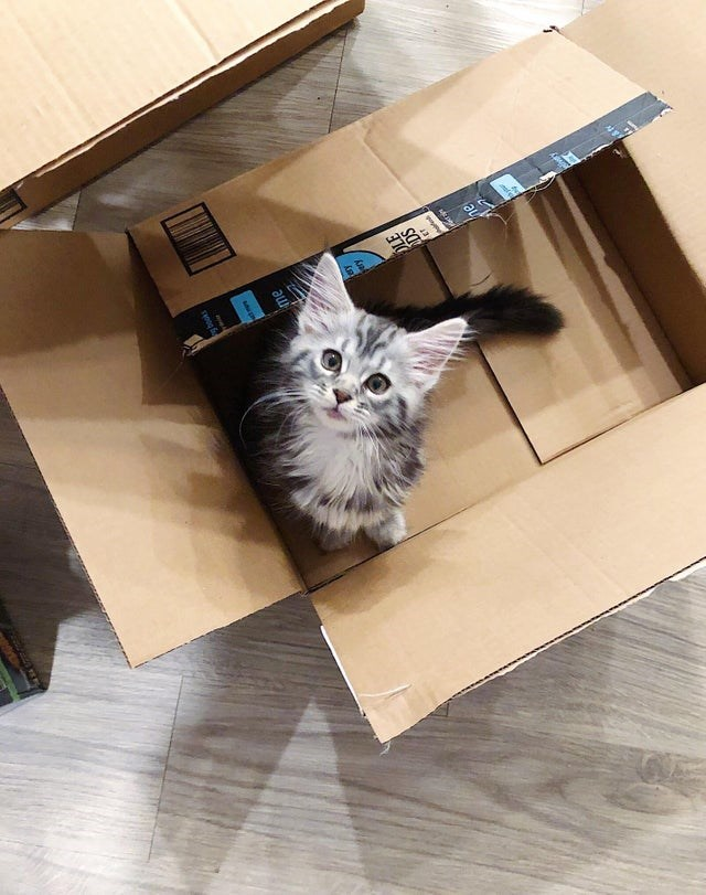 cute kitten in an amazon box