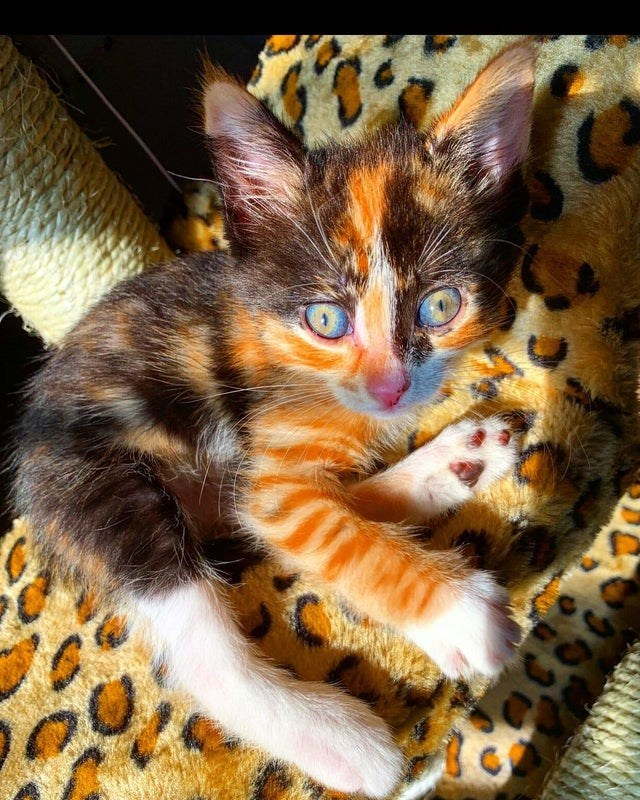 Cat with psychedelic colors and cuteness