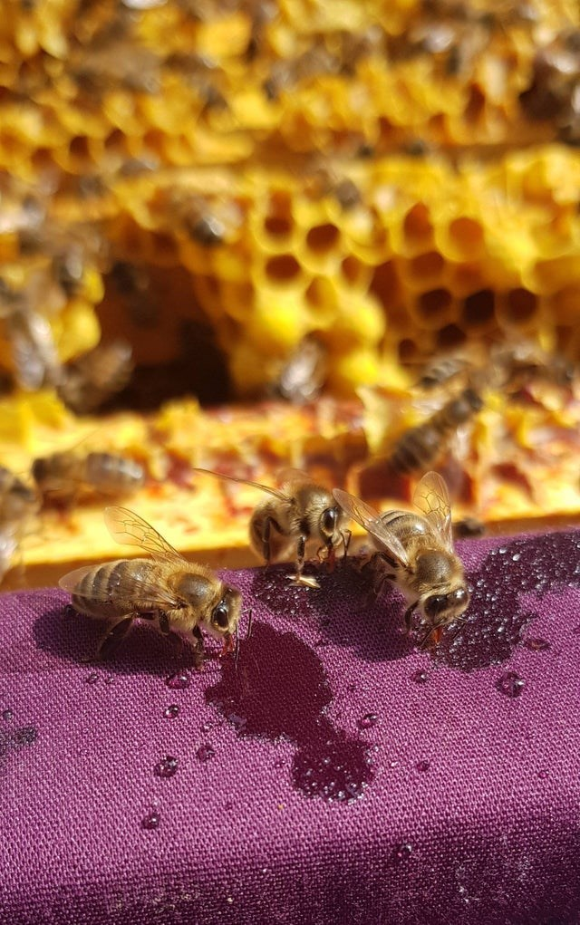 Bees chomping on some honey