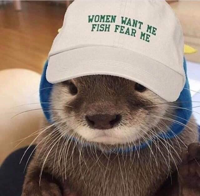 cute baby otter wearing a hat that says WOMEN WANT ME FISH FEAR ME