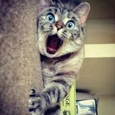 scared Cat - NGE J