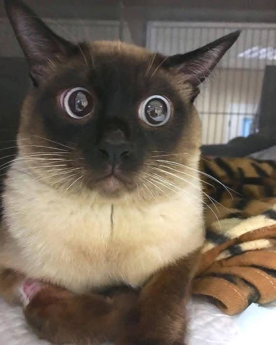 scared - Cat