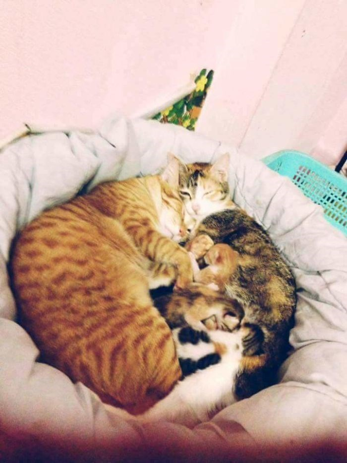Cats cuddling with their kittens