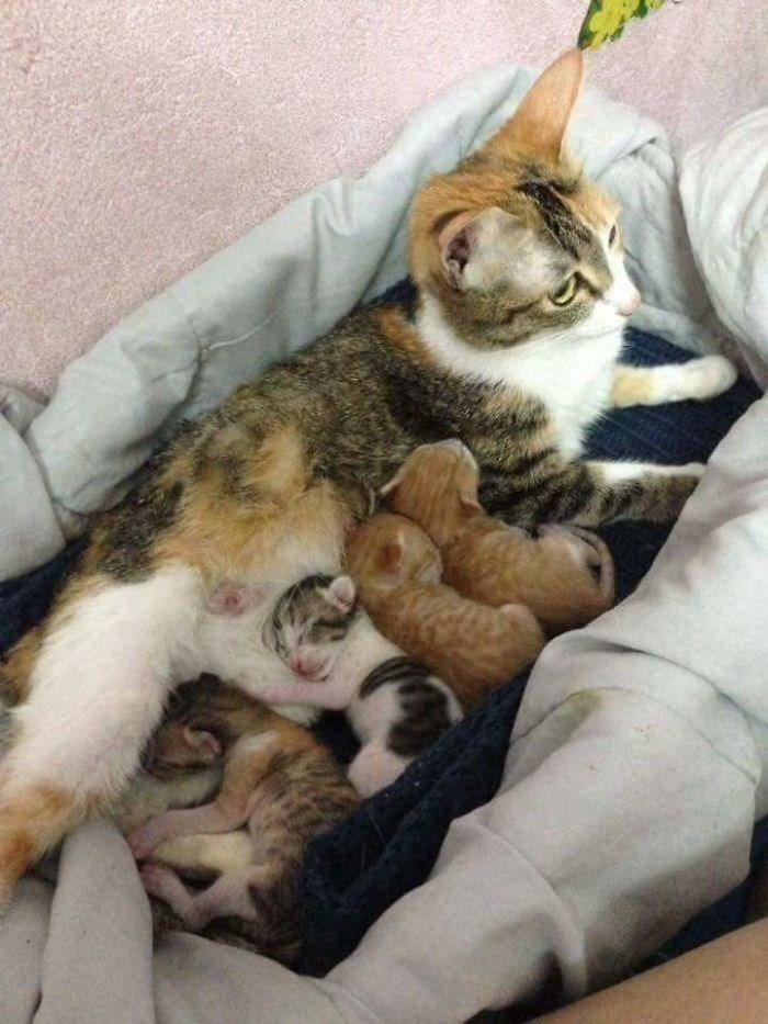Cat feeding her kittens