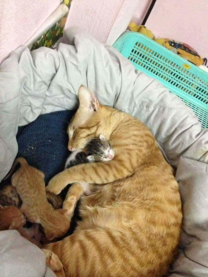 Cat sleeping with his kittens