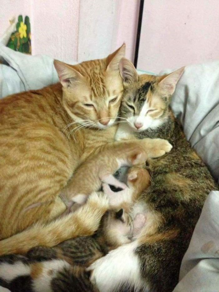 Cats and kittens napping together like one big happy family