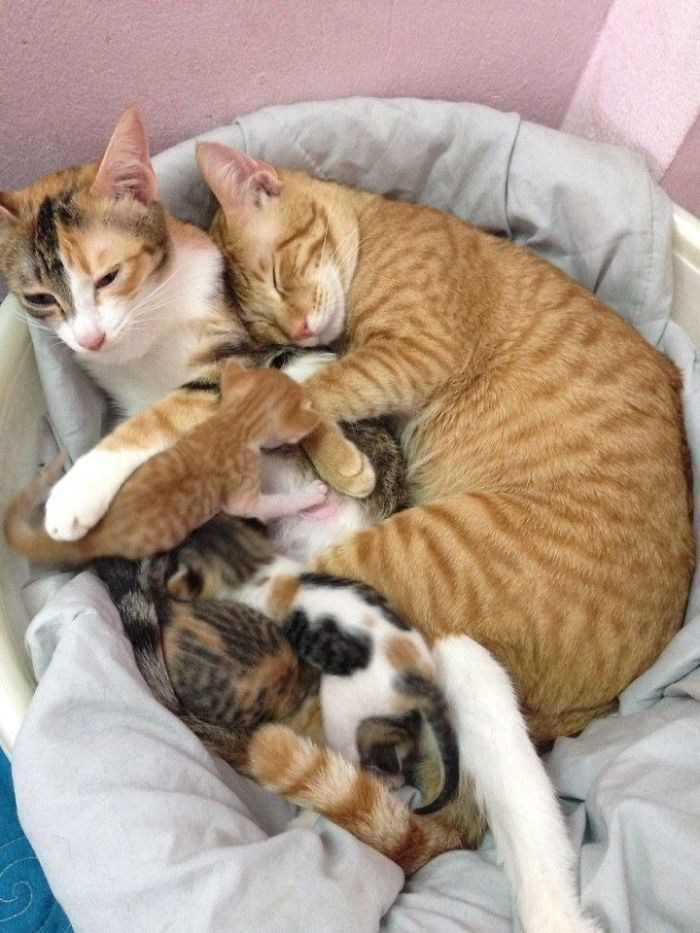 Cats cuddling up with their kittens