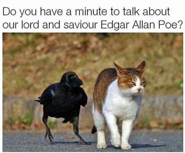 cat meme funny crow - 9319834624