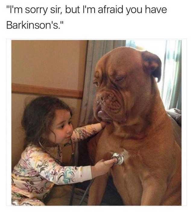 dog memes doggo meme funny barkinsons - 9319835648