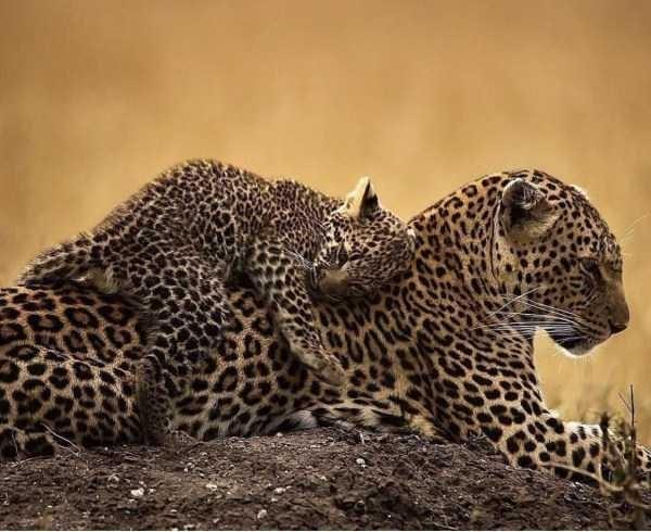 Amazing animal photos - Terrestrial animal