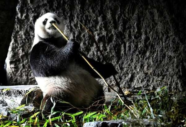 Amazing animal photos - Bird