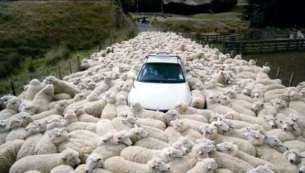 Amazing animal photos - Vehicle