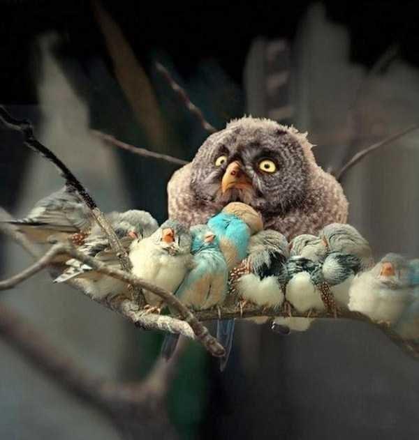 Amazing animal photos - Owl