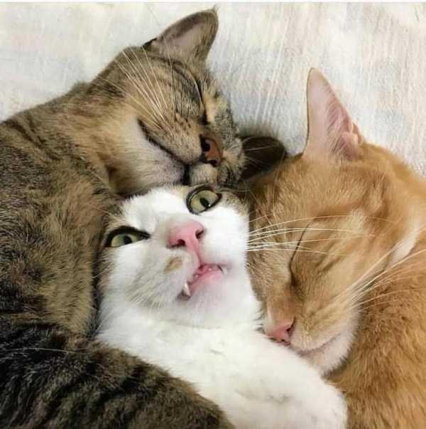 Amazing animal photos - Cat