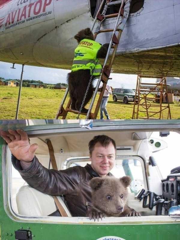 Amazing animal photos - Aerospace engineering - AVIATO SE Www.aATOPFUELRU IATOP 6HTeAa