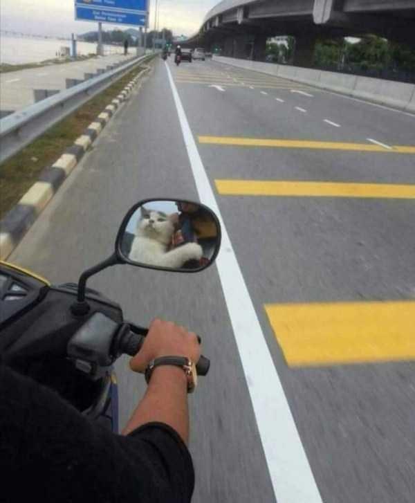 Amazing animal photos - Motor vehicle