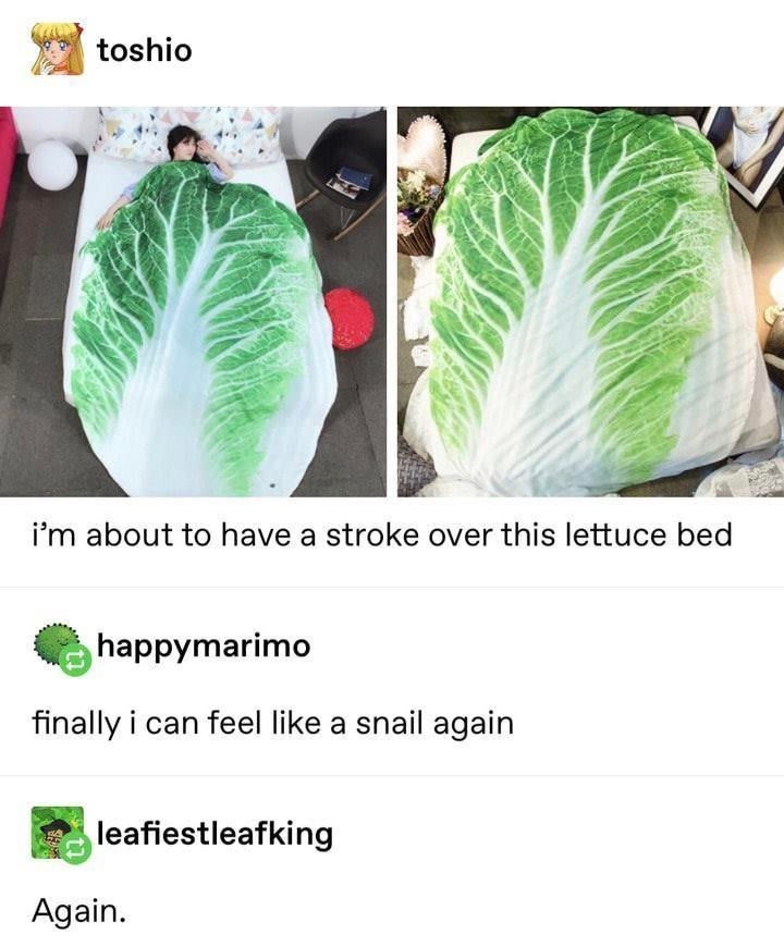 meme - Leaf - toshio i'm about to have a stroke over this lettuce bed happymarimo finally i can feel like a snail again leafiestleafking Again.