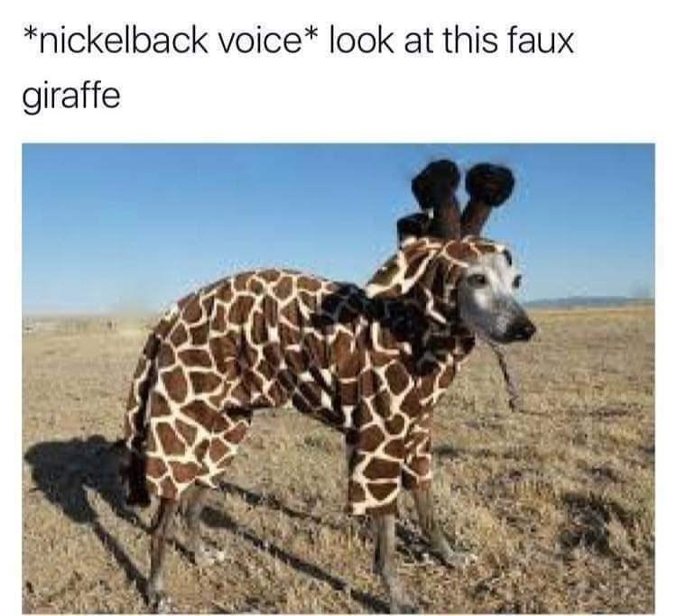 meme - Terrestrial animal - *nickelback voice* look at this faux giraffe