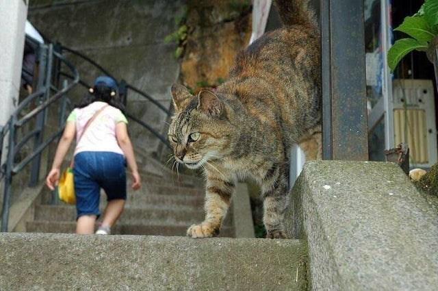 optical illusion giant cat
