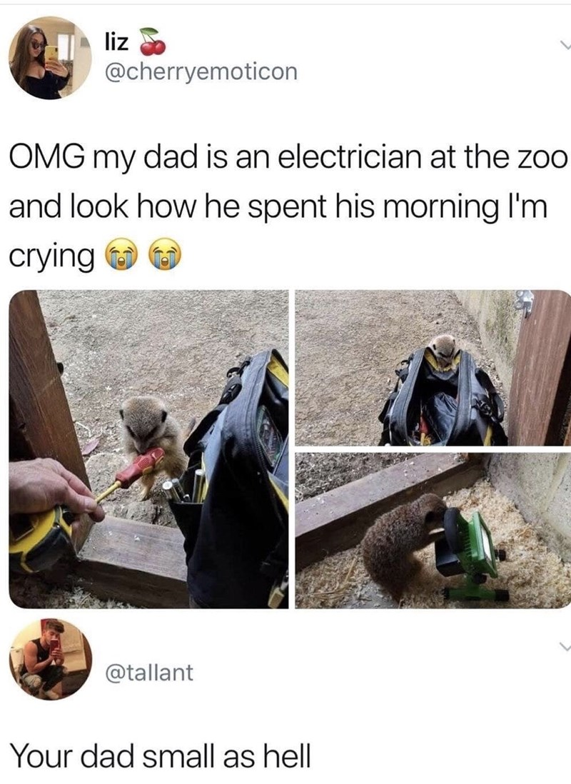 Memes and tweets - Rock - liz @cherryemoticon OMG my dad is an electrician at the zoo and look how he spent his morning I'm crying @tallant Your dad small as hell