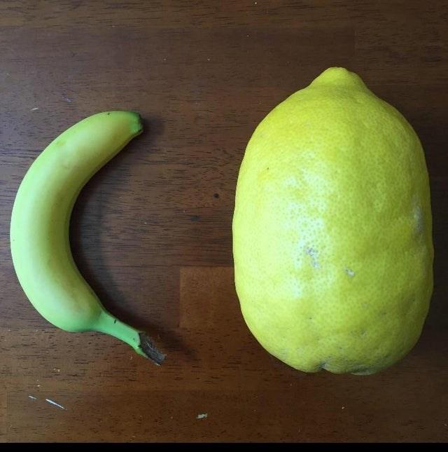 optical illusion tiny banana or giant lemon