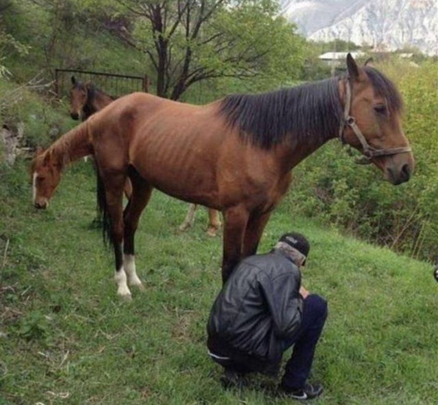 optical illusion horse with two heads