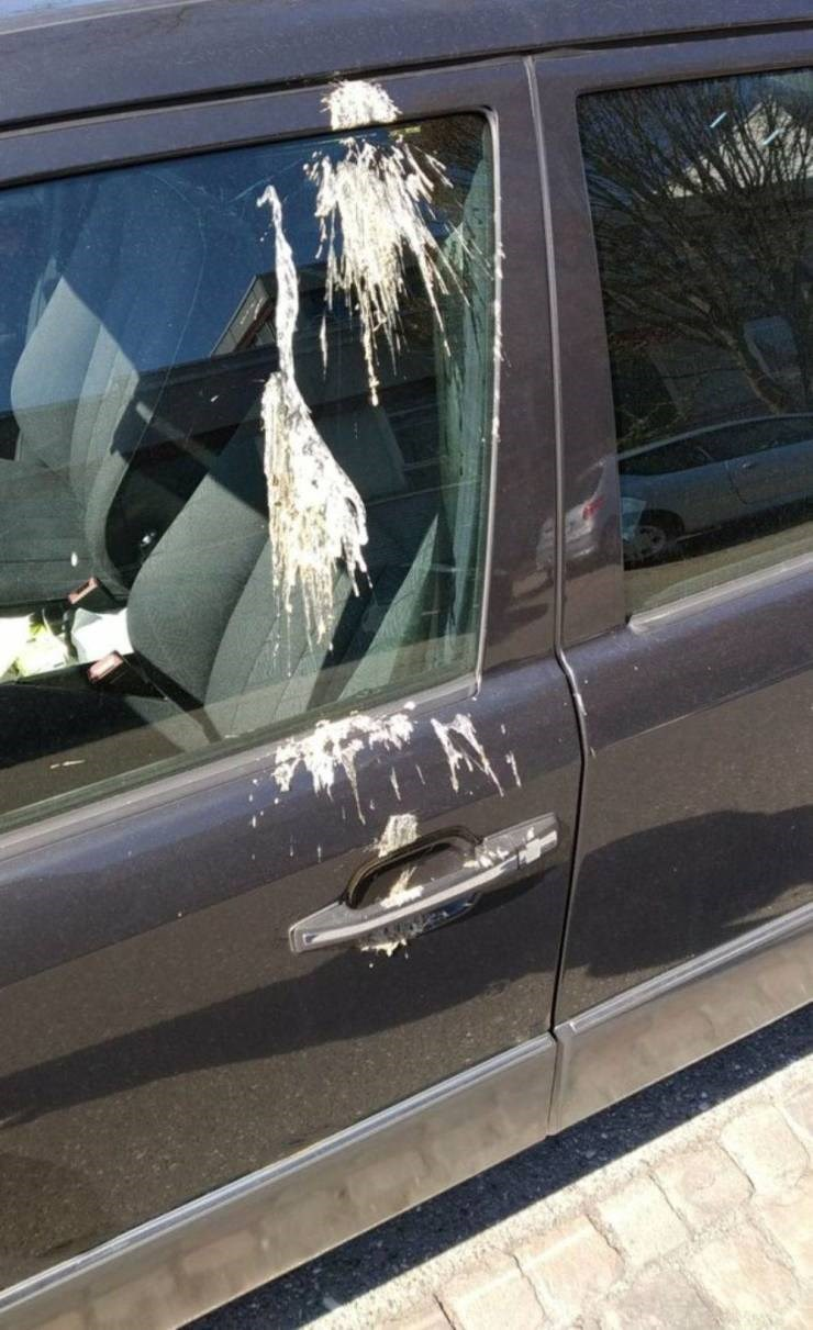 unlucky - Vehicle door with bird poop all over it and the handle